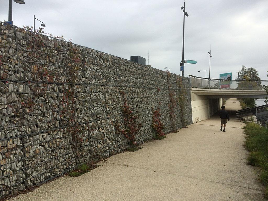 Mur et végétaux